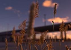 Fans machen wunderschöne Tesla Autowerbung mit Glühwürmchen